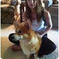 Adopt A Pet :: Titan - Inola, OK
