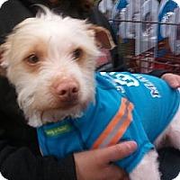 Adopt A Pet :: Marco - Encinitas, CA