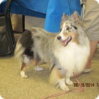 Adopt A Pet :: Kisses - apache junction, AZ