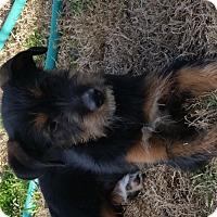 Adopt A Pet :: Hank - San Antonio, TX