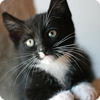 Adopt A Pet :: Jughead - Canoga Park, CA