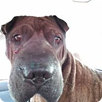 Adopt A Pet :: Mr. Bojangles in NC - pending - Apple Valley, CA