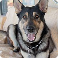 Adopt A Pet :: Stash - Las Vegas, NV