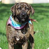 Adopt A Pet :: Cyra - Alpharetta, GA