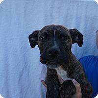 Adopt A Pet :: King - Oviedo, FL