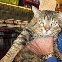 Adopt A Pet :: Rex - Logan, UT
