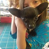 Adopt A Pet :: Jude - Ogden, UT