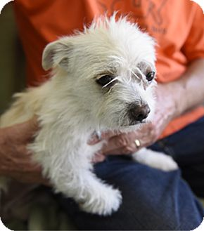 Terrier (Unknown Type, Medium) Mix Dog for adoption in Pt. Richmond, California - PAPRIKA