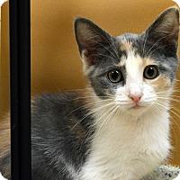 Adopt A Pet :: Francine - Richmond, VA