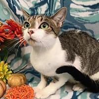 Adopt A Pet :: Seela - Oviedo, FL