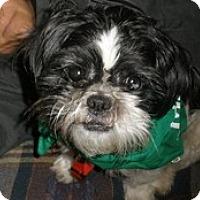 Adopt A Pet :: Kisses - Madison, WI