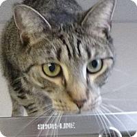 Adopt A Pet :: Sandra - St. Petersburg, FL