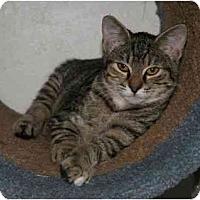 Adopt A Pet :: Baby - La Mesa, CA