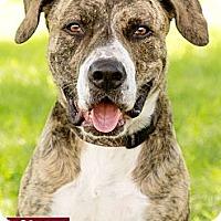 Adopt A Pet :: Roscoe - Marina del Rey, CA