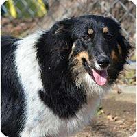 Adopt A Pet :: Beauty - New Boston, NH
