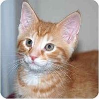 Adopt A Pet :: Sawyer - Markham, ON