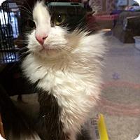 Adopt A Pet :: Darius - Byron Center, MI