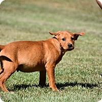 Adopt A Pet :: Atticus - South Dennis, MA