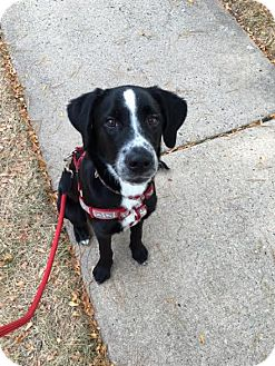 Border Collie Mix Dog for adoption in North Brunswick, New Jersey - Lucy