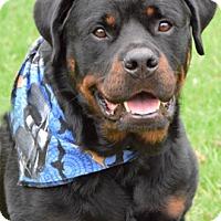 Adopt A Pet :: Buddy - Mason, MI