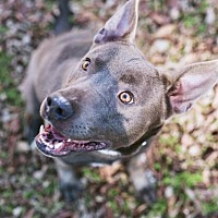 Adopt A Pet :: Abby - Nashville, TN