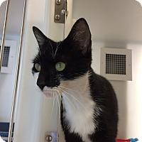 Adopt A Pet :: Betsy - Cumming, GA