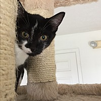 Adopt A Pet :: NEWTON! - Owenboro, KY