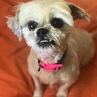Adopt A Pet :: Lois - Pompano beach, FL