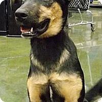 Adopt A Pet :: Priscilla - Fresno, CA