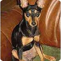 Adopt A Pet :: Little Girl - Nashville, TN