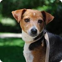 Adopt A Pet :: Honey - New Milford, CT