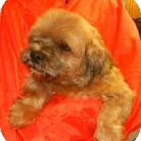 Adopt A Pet :: Lawrence ADOPTED!! - Antioch, IL