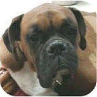 Adopt A Pet :: Tyson - North Haven, CT