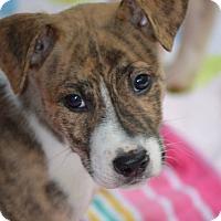 Adopt A Pet :: Remi - Wimberley, TX