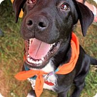 Adopt A Pet :: Elwood - in Maine - kennebunkport, ME