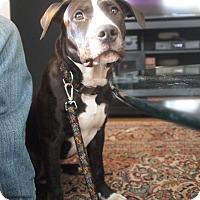 Adopt A Pet :: Mugsy - New York, NY