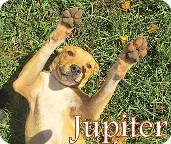 Labrador Retriever Mix Puppy for adoption in Georgetown, South Carolina - Jupiter
