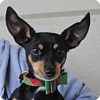 Adopt A Pet :: Bruno - Weatherford, TX