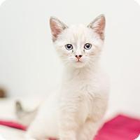 Adopt A Pet :: Margaret - Fountain Hills, AZ