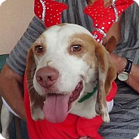 Adopt A Pet :: Joey - Canoga Park, CA