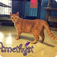 Adopt A Pet :: Amethyst - Converse, TX