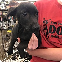 Adopt A Pet :: Zach - Fresno, CA