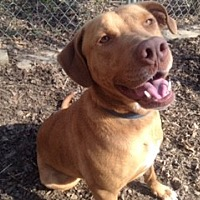 Adopt A Pet :: SOPHIE - Massillon, OH
