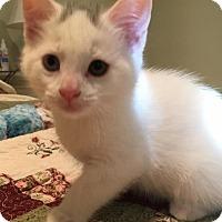 Adopt A Pet :: Hamm - River Edge, NJ