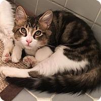 Adopt A Pet :: Dale - River Edge, NJ