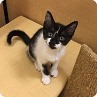 Adopt A Pet :: Fiddle - Colmar, PA