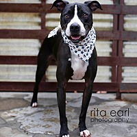 Adopt A Pet :: Handsome Chance - Burbank, CA