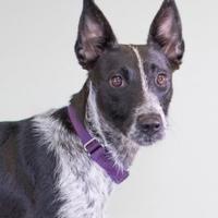 Adopt A Pet :: Hina - Lihue, HI
