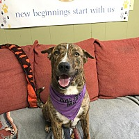 Adopt A Pet :: Yeary - Williston, VT