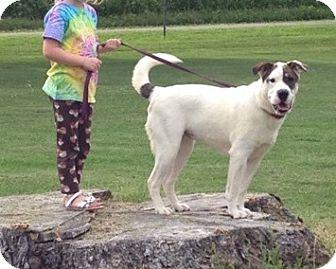Shar Pei Mix Dog for adoption in Acushnet, Massachusetts - Malaya